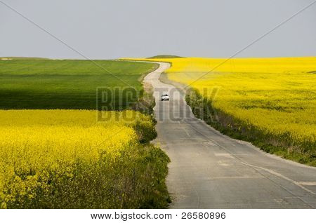 Car Driving On Road Between Rapeseed Fields