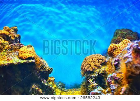 Shallow underwater without fishes
