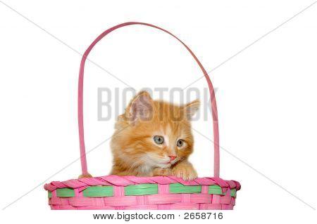 Cute Easter Kitten