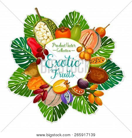 Exotic Fruits And Tropical Berries Of Persimmon, Cantaloupe And Date, Star Apple, Granadilla And Kiw