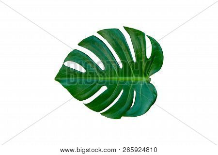 Tropical Palm Leaves Isolated On White Background.