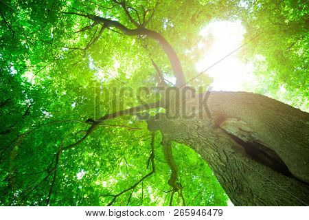 Forest trees.Sunlight in the green forest, spring time.