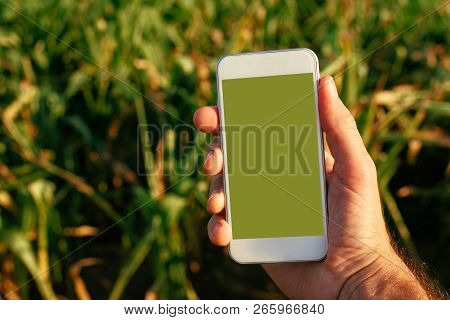 Smart Phone Agriculture App Mock Up Screen, Agronomist Holding Mobile Phone Device