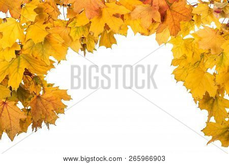 Arch Of Bright Autumn Maple Leaf Isolated On White Background