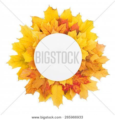 Round Empty Space For Writing On Autumn Bright Leaves Isolated On White Background