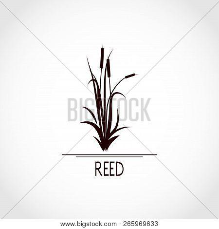Sedge, Reed, Cane, Bulrush. Set. Black Silhouette On White Background. Logo, Emblem, Sign, Symbol
