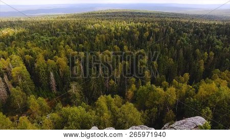 Healthy Green Trees In Forest Of Old Firs And Pines. Footage. Concept Of Ecosystems And Healthy Envi