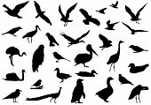 Shadows of birds created a line drawing. Created by real photograph birds. poster