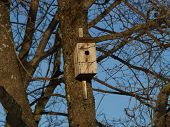 Bird house in spring waits for inmate poster