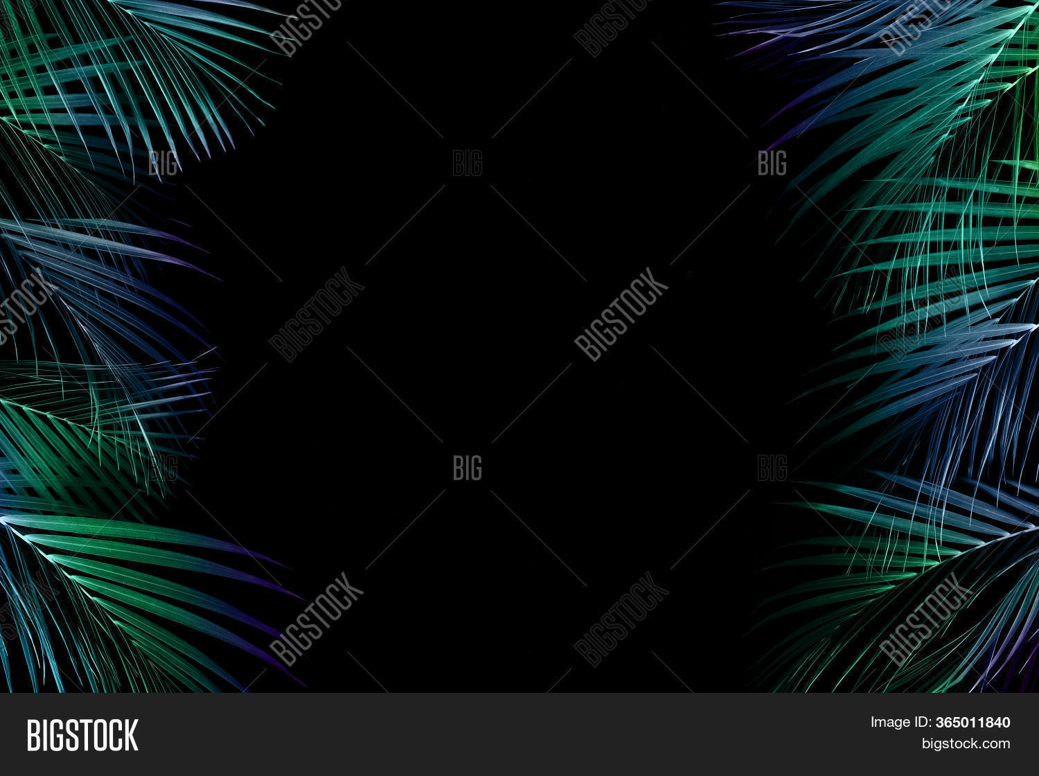 Tropical Palm Leaves Image Photo Free Trial Bigstock Download this free vector about black and golden tropical leaves background, and discover more than 10 million professional graphic resources on freepik. bigstock
