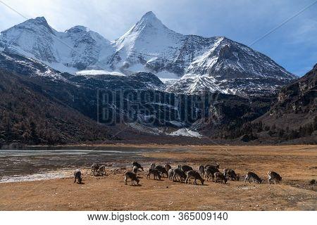Snow Mountain Range Of Yading Nature Reserve, Daocheng China