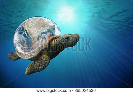 The Sea Turtle Swims In The Pacific Ocean Environment The Background Of The Sun. Underwater Photo Of