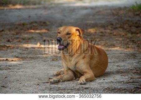 Brown Dog Lying On The Ground Looking Up