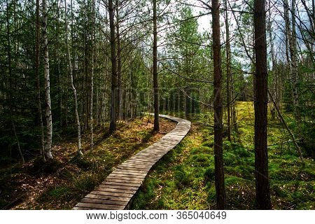 Trail Wooden Walkway Through Beautiful Forest In Summer Hdr