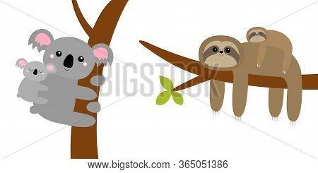 Koala Bear. Sloth Hanging On Tree Branch Leaf. Cute Cartoon Kawaii Funny Lazy Character Set. Mother