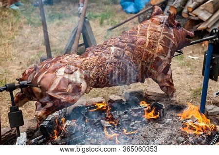 Whole Roasted Piglet Body Turning On Natural Fireplace. Large Barbecue In The Process Of Cooking Mea
