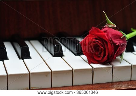A Red Rose On Top Of Piano Keys