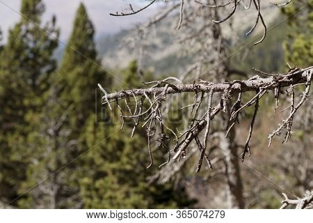Leafless Tree Branch With The Valley In The Background