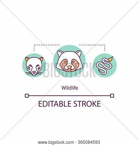 Wildlife Concept Icon. Raccoon In Conservation. Carnivore Feline. Countryside Danger. Wild Animals I
