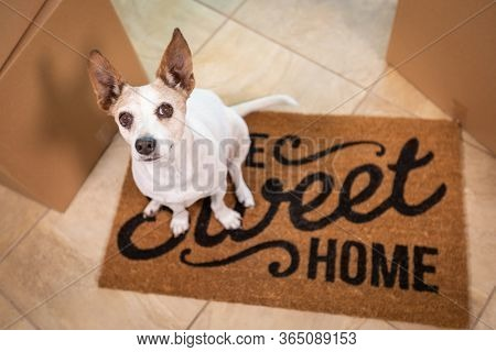 Cute Dog Sitting on Home Sweet Home Welcome Mat on Floor Near Boxes.