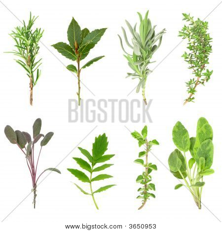 Herb leaf sprigs of rosemary bay lavender thyme purple sage valerian (vallium substitute) oregano and variegated sage set against a white background. In order from top left to right. poster