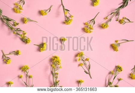A Lot Of Wildflowers On A Pink Background. Yellow Wildflowers. Floral Background