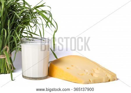 Dairy Farming. Cheese Production.