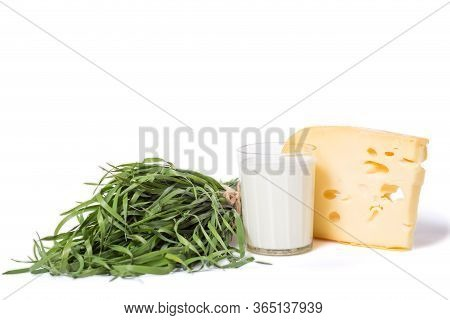 Cheese Production. Manufacturing Of Dairy Production.