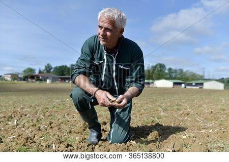 Farmer checking dryness of farm soil