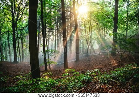 Dramatic natural forest and sunbeams through fog in the morning. Location place of Saxon Switzerland national park, Germany, Europe. Photo of a mystical and fairy forest. Discover the beauty of earth.