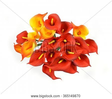 Calla lilies on a white background. St. Valentine's Day. Beautiful yellow and red flowers