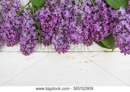 Spring Flower Landscape. Spring Blooming Spring Flowers On A White Wooden Background. Colorful Flowe