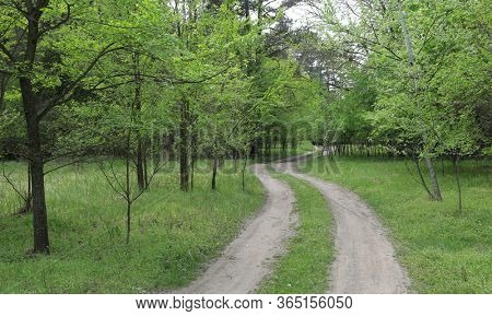 dirt road in green forest, spring landscape with road in forest