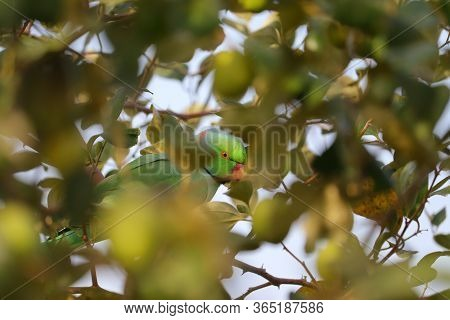 Parrot Bird And Selective Focus Points Background, Parrot Bird Background With Defocused Background,