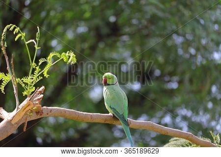 A Parrot Sitting On Branch, Bird Watching, Parrot Background