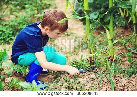 A Boy Cleans Weeds Using A Rake In The Garden. Little Gardener Working.