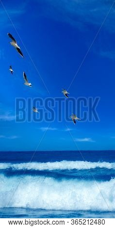 flock of seagulls flying over seascape with sunny blue sky