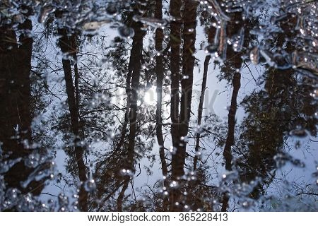 A Reflection Of Green Trees In A Puddle, Water Surface, Forest And Woods, On The Ground, Mirror Refl