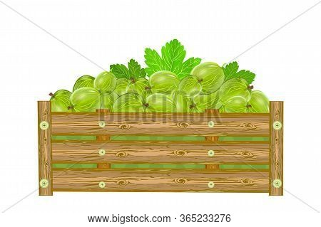 Gooseberries In Box Isolated On White Background. Crate Of Juicy Berries. Eco Farm, Market, Transpor