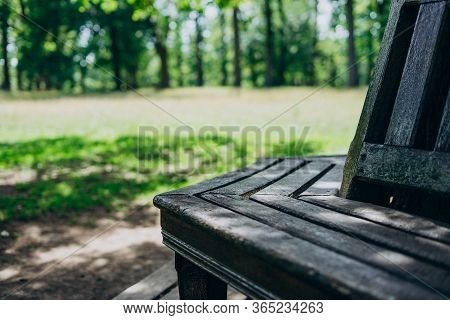 Wooden Bench Near A Tall Tree. Bench In The Park On A Summer Day. Wooden Bench On The Green Grass.