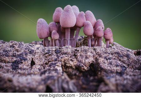 Mushroom Macro Photography In Natural Wolrd