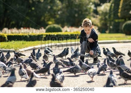 Stylish Boy Of 7 Years In The Park Feeds Pigeons. There Are A Lot Of Birds. Baby Happy Feed Hungry P