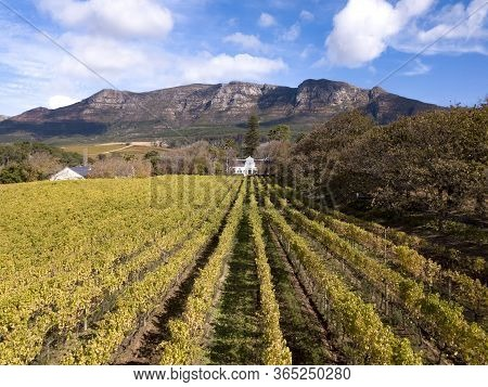 Aerial Of A Wine Farm In Cape Town, South Africa
