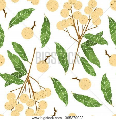 Trendy Seamless Pattern With Longan Fruit. Ranch And Leaves Of Longan Isolated On White Background.