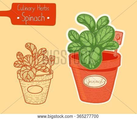 Food And Culinary Herb Spinach Growing In A Pot, Hand-draw Sketch Illustration