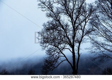 Mood Shadows Of Silhouetted Trees In The Dark Misty Forest