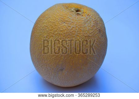 Side View Of Cantaloupe Muskmelon Fruit Of India, Yellow Orange In Color Tasty Sugary Juicy Nutritio
