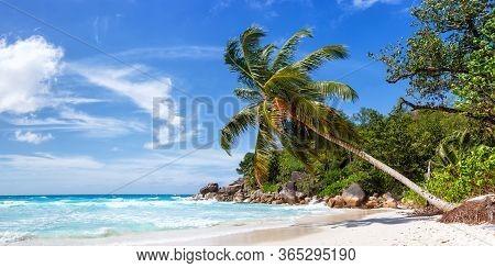 Seychelles Anse Georgette Beach Praslin Island Palm Panoramic View Vacation Sea