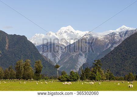Southern Alps. Landscape. South Island, New Zealand