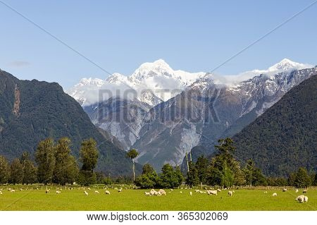 Mount Of Southern Alps. South Island, New Zealand